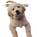 Miniklere Karne Hediyesinde yavru köpek `in`, bisiklet `out`
