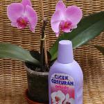 Botanika ile Orkideler Aşkınız Kadar Ölümsüz