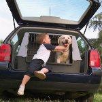 Çocuklar Arka Koltuğa, Köpekler kulübesine; Haydi, Hep Birlikte Gezmeye!