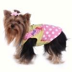 Petza.com.tr'deki Evcil Kedi ve Köpek Kıyafetleri Modanın Nabzını Tutuyor