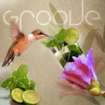 Groove`un Yeni İksiri `Mojito Shot`