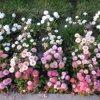 Florya`da Bahar - Emel Demircioğlu