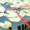 Sarıyer - Selçuk Ünver
