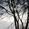 Sarıyer`de Sonbahar - Tufan Çankaya