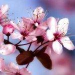 Bahar ve Aşk Şarkıları