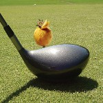 8. Mövenpick Hotel İstanbul Golf Cup Yapılıyor