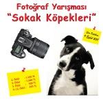 Sokak Köpekleri Fotoğraf Yarışması