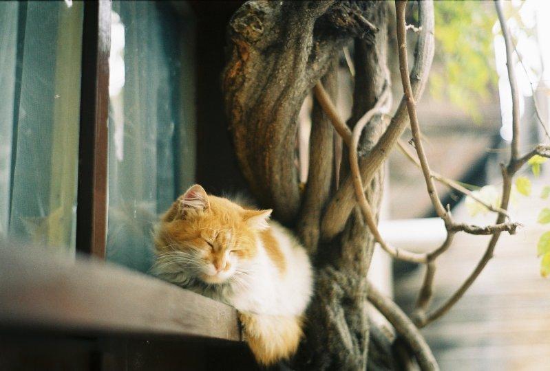 Miskin Kedi (Zeyrek) - Enes Özdil