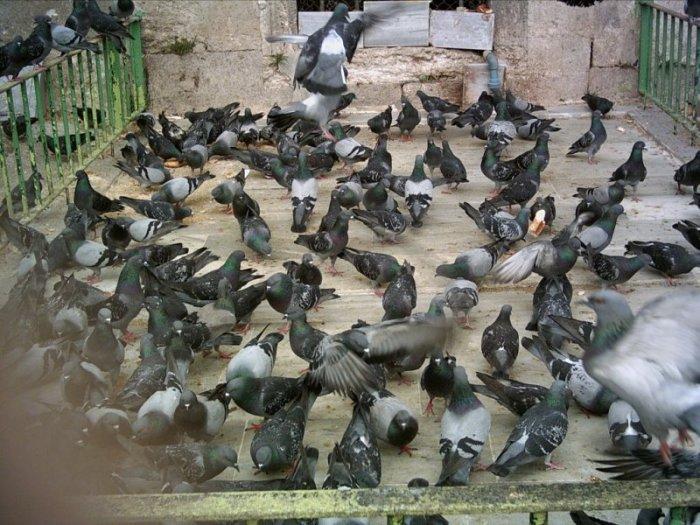 Güvercinler, Eyüp Sultan - Hayriye Onat