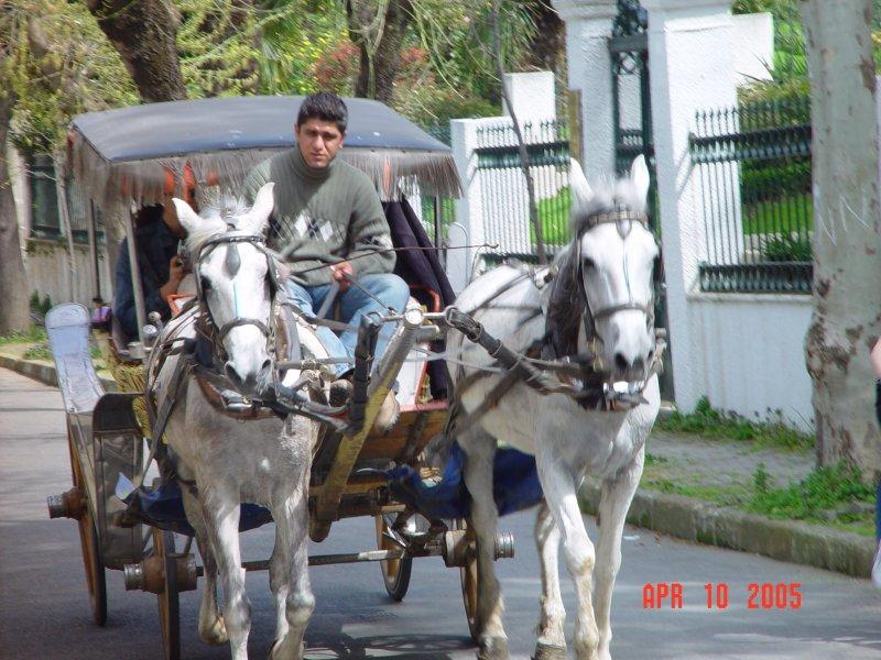 Büyükada - Murat Özlü