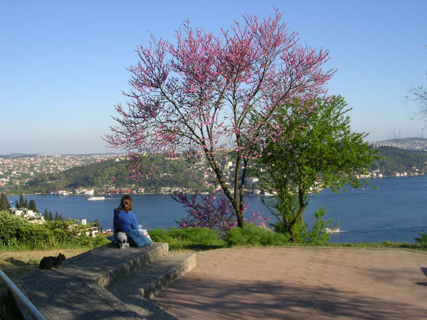 Boğaziçi Üniversitesi`nden Boğaz - Ela Somaklı