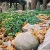 Mezartaşı (Eyüp)- Enes Özdil