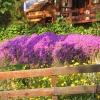 Burgazada`da Bahar Çiçekleri - İlyas Kaptan