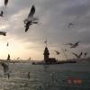 Kız Kulesi & Martılar - Nihal Deniz