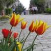 Soğukçeşme Sokağı (Sultanahmet) - Şahin Uzma