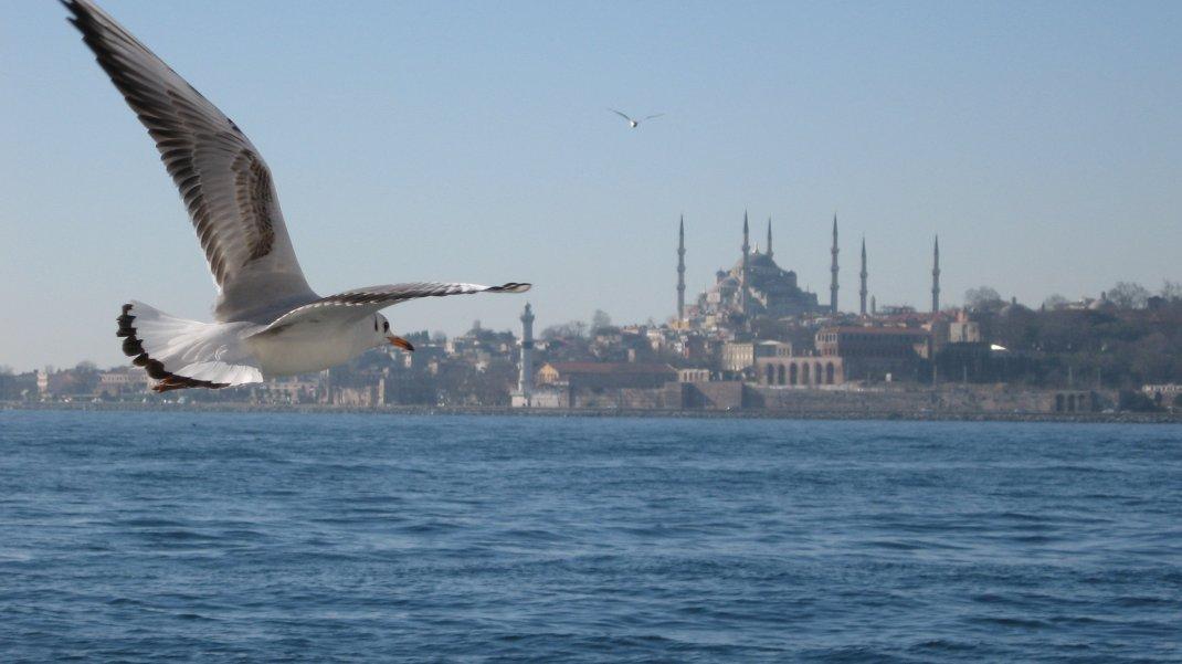 İstanbul - Arif Efe