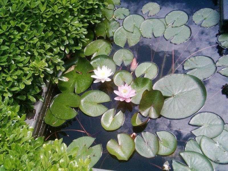 Sakıp Sabancı Müzesi Bahçesi - Selin Kızanlık