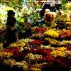 Çiçekçi > Celal Erdoğdu