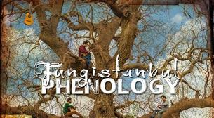 Fungistanbul - Phenology