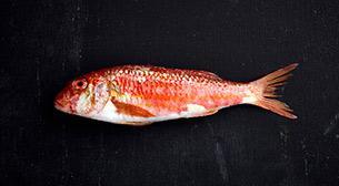 MSA - Deniz Ürünleri