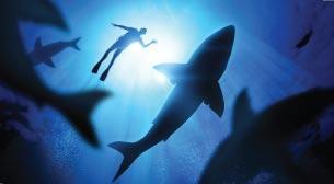 Köpekbalığı Dalışı