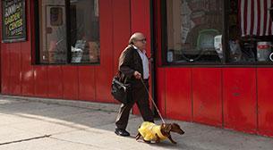 Wiener - Dog
