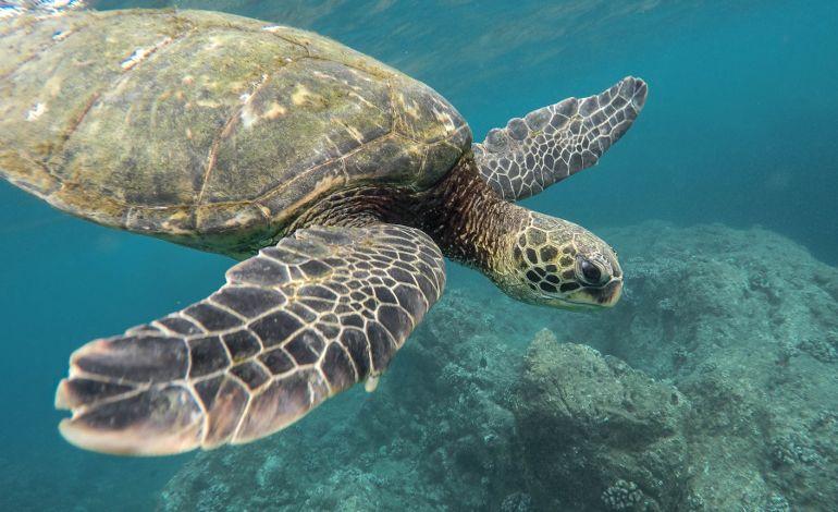 Dünyanin En Güzel Mercan Resiflerine Yolculuk