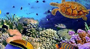 Denizaltı Masalı