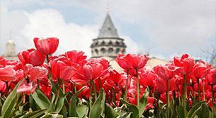 İstanbul Bahçelerinin Sultanı Lale