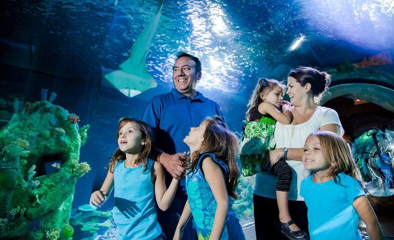 Winx Perileri'yle Çok Eğlenceli Bir 23 Nisan Sea Life İstanbul'da Sizi Bekliyor