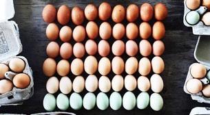 Yumurtanın 50 Tonu