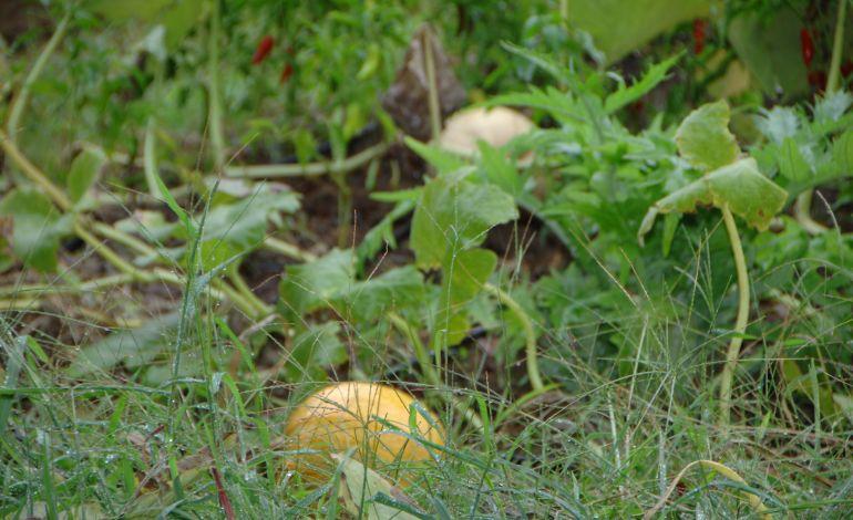 Okul Bahçelerınde Hasat