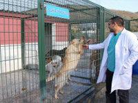 Başakşehir'de Sokak Hayvanları Güvence Altında