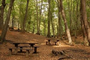 Belgrad Ormanları Temizlenecek