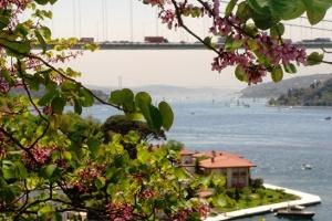 Bir Martının Kanatlarından İstanbul'u Seyretmek