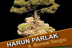 Harun Parlak - Bonsai