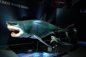 Köpekbalığı Dünyası Sergisi