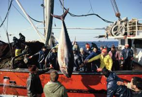 Kadir Can - Balık Ağ(a)lara Takıldı Sergisi