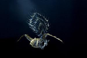 Perili Köşk'te Mekanik Canlılar