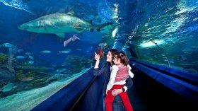 Annenizi Turkuazoo'da Okyanusun Güzellikleriyle Buluşturun