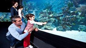 Babanıza Okyanusun Derinliklerini Hediye Edin