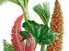 Işık Güner'in Bitki İllüstrasyon Sergisi