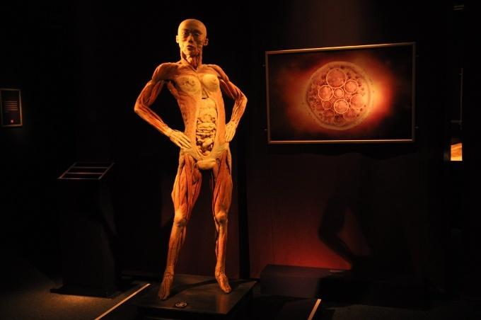 The Human Body – İnsan Vücuduna Çarpıcı Yolculuk