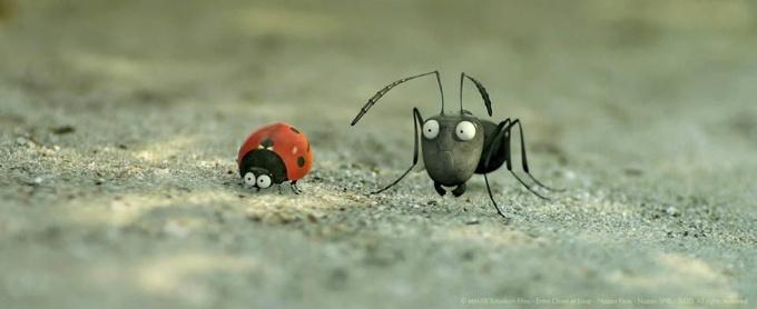 Kayıp Karıncalar
