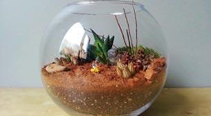 Teraryum: Minyatür Dünya