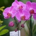 Anneler Günü'nde Sevginizi Orkidelerle Söyleyin