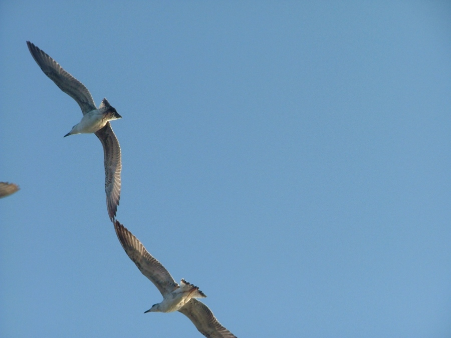 Kuşlar - Kübra Öcal