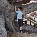 Filmekimi / Ağaç