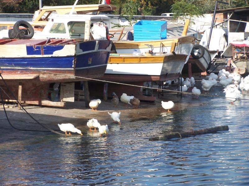 Samatya Balıkçı Barınağı - Ekrem Aydar