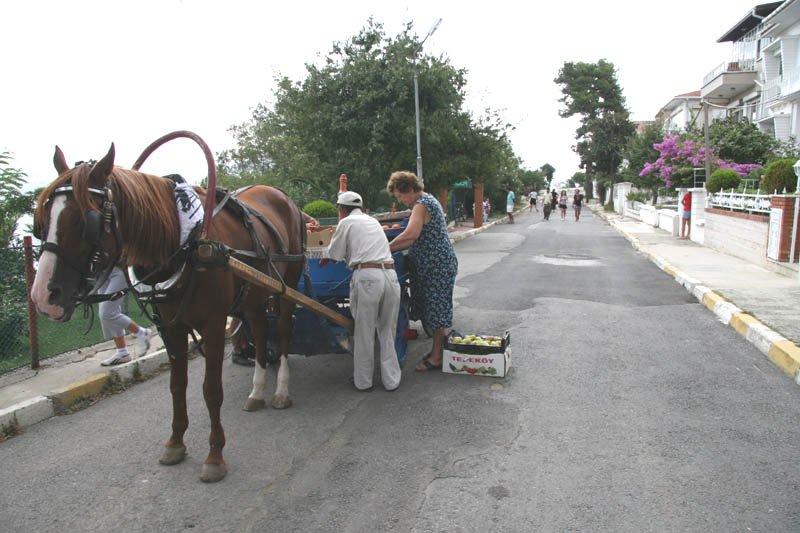 Kınalıada > Türkan Arpacı